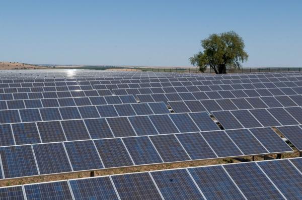 solaranlage photovoltaik baum