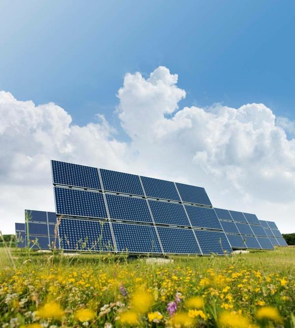 solaranlage und photovoltaik natur blumen wiese