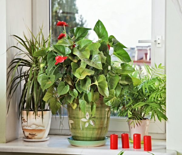 Wohnzimmer Pflanzen Wenig Licht