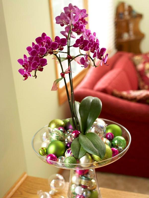 Zimmerpflanzen bl hend beleben sie ihr zuhause for Glasvase bepflanzen