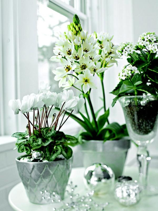 topfpflanzen zimmerpflanzen blühend weiß flammendes kätchen alpenveilchen