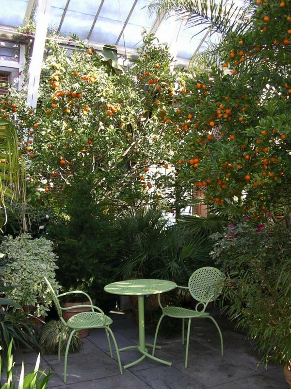wintergarten selber bauen tropische bäume