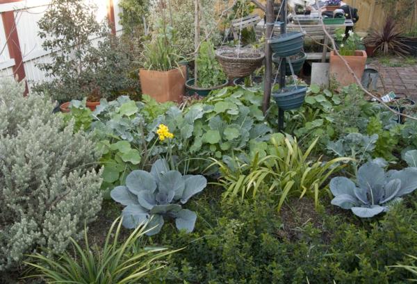 wintergarten selber machen gemüse blumen