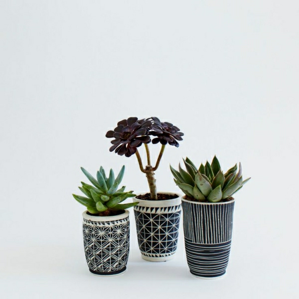 zimerpflanzen bilder topfpflanzen sukkulenten dekorative blumentöpfe