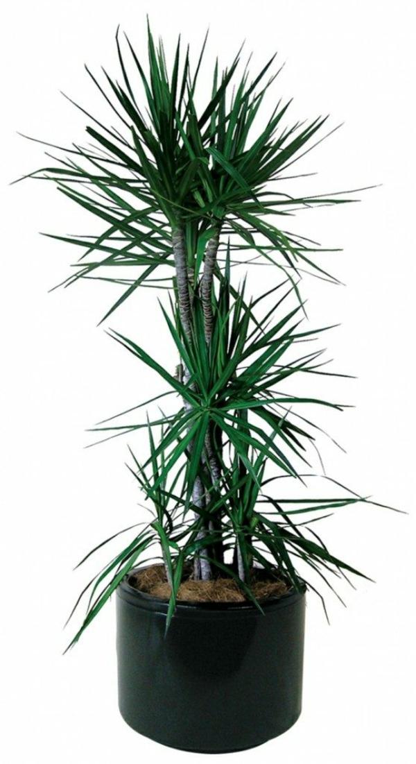 Zimmerpflanzen pflegeleicht und auch f r anf nger geeignet 40 bilder - Zimmerpalme arten ...