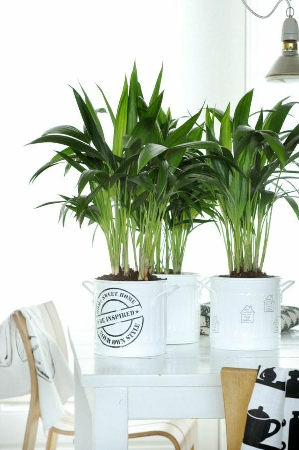 zimmerpalmen kentiapalme zimmerpflanzen wenig licht
