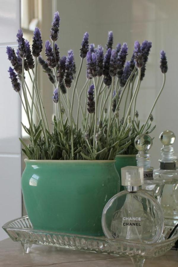 zimmerpflanzen arten lavendel topfpflanze deko ideen