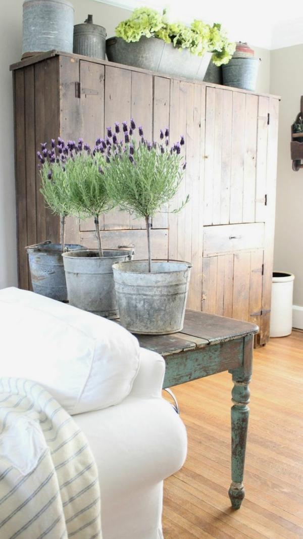 Zimmerpflanzen arten bilder von den beliebtesten for Deko topfpflanzen