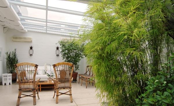 zimmerpflanzen arten topfpflanzen palmenarten wintergarten