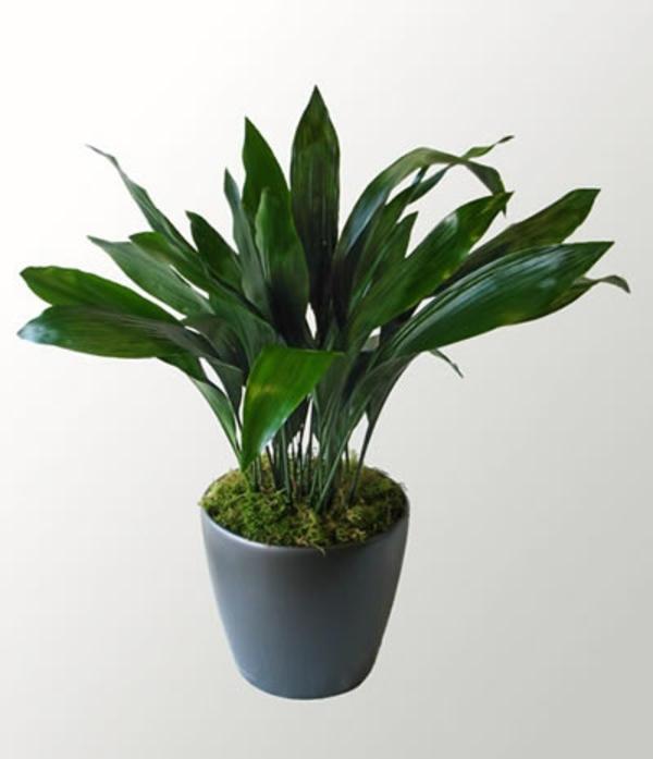 Pflanzen Die Kein Licht Brauchen zimmerpflanzen die wenig licht brauchen