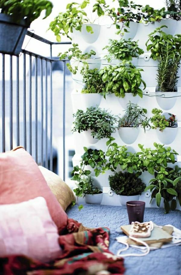 zimmerpflanzen pflegeleicht balkonpflanzen kräutergarten