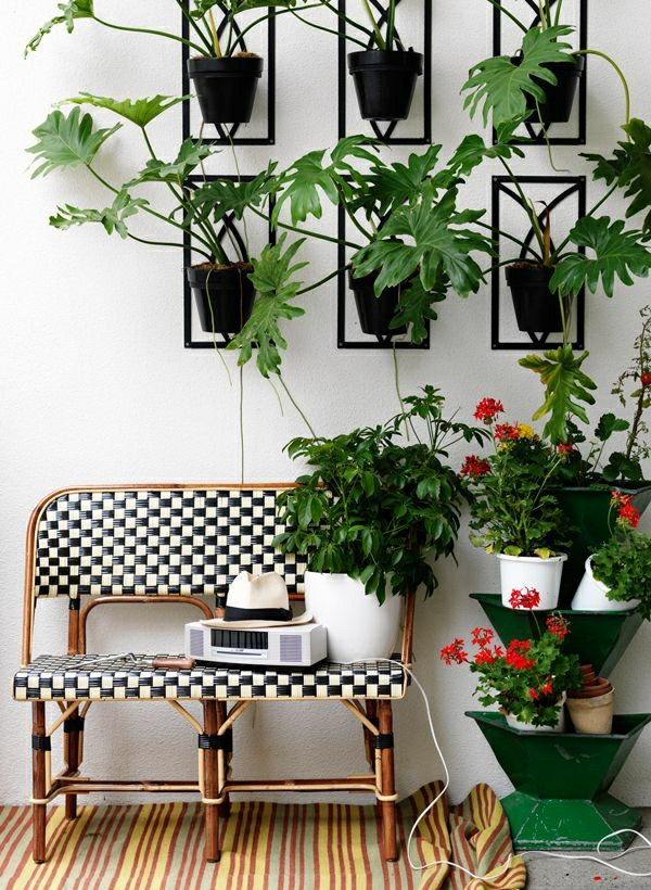 zimmerpflanzen pflegeleicht kreative wandgestaltung zimmergrünpflanzen
