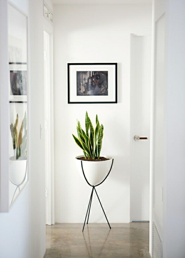 zimmerpflanzen pflegeleicht und auch f r anf nger geeignet. Black Bedroom Furniture Sets. Home Design Ideas