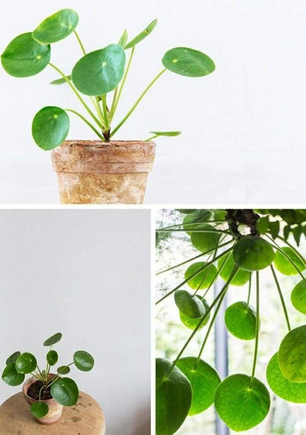 zimmerpflanzen pflegeleicht topfpflanzen glückstaler zimmergrünpflanzen