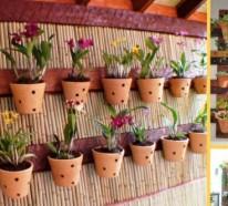 Zimmerpflanzen pflegeleicht und auch für Anfänger geeignet – 40 Bilder