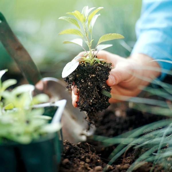 Gartengestaltungsideen anpflanzen ideen