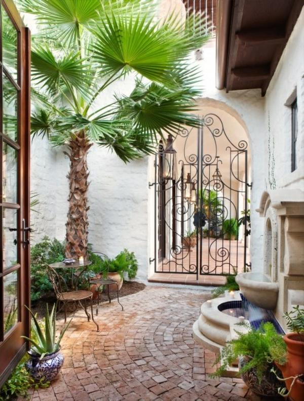Die Hanfpalme Im Garten Oder Als Zimmerpflanze Beides Ist Moglich