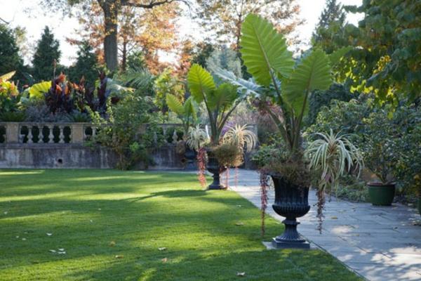 elefantenohr pflanze im garten gartenpflanzen vorgarten gestalten