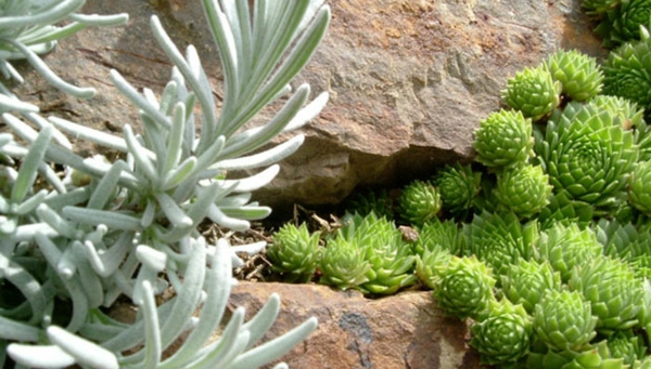 garten anlegen ideen gartengestalten pflanzen arten
