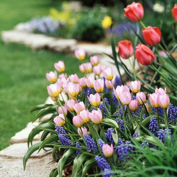garten anlegen ideen gartengestalten rosa tulpen