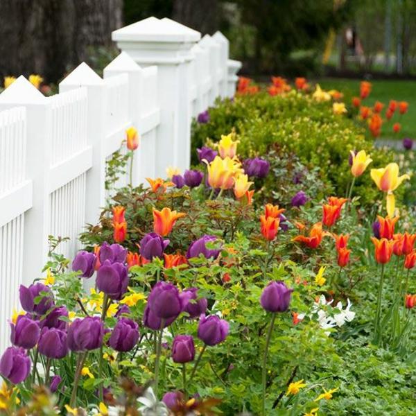 gartengestaltung beispiele tulpen rot lila