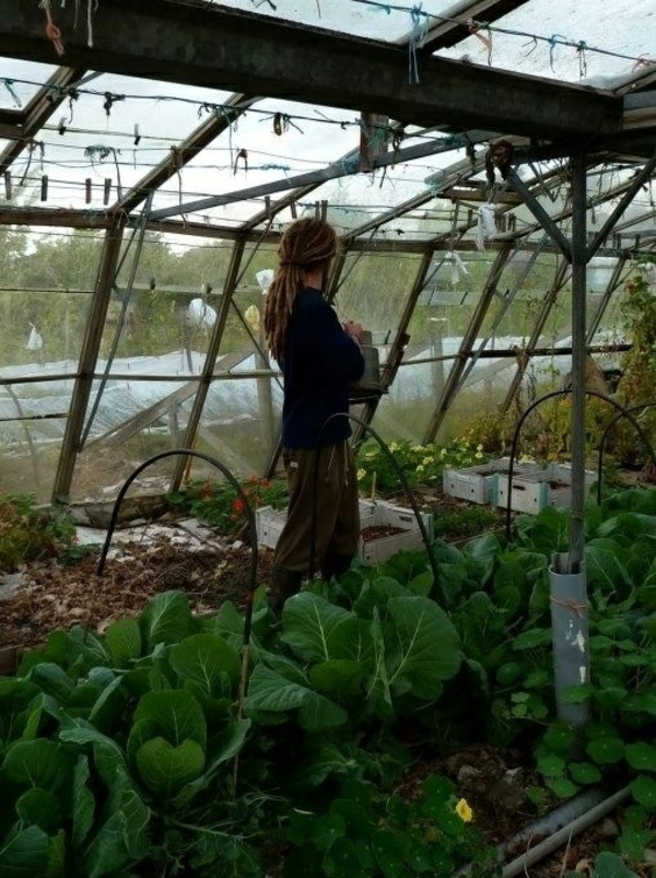 gartenhaus pflanzen gemüse wintergarten gestalten