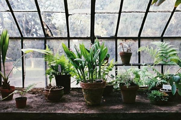 gemüse und wintergarten pflanzen gartenhaus aus glas