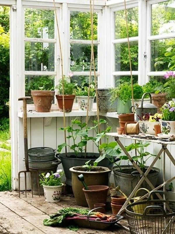 gemüse und wintergarten pflanzen gartenhaus und gartenzubehör