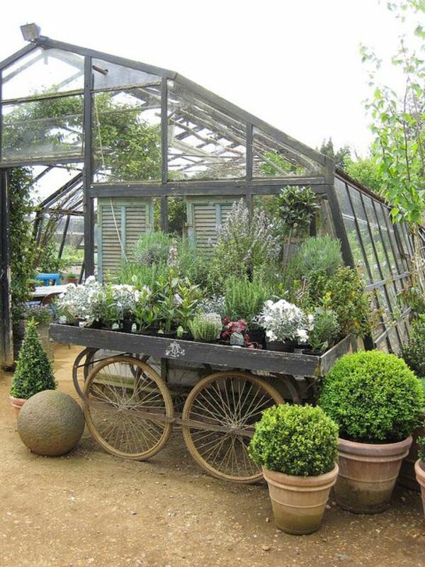 gemüse und wintergarten pflanzen glashaus