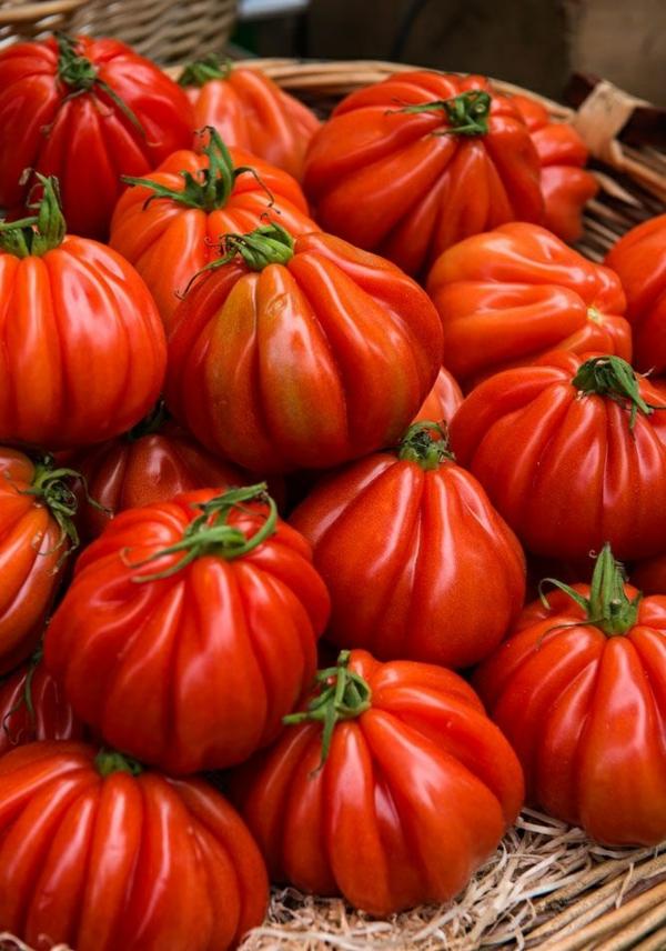 gemüse wintergarten bauen bio produkte tomaten