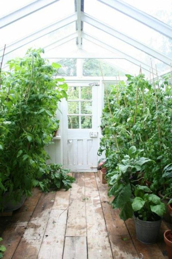gemüse wintergarten gestalten altes gartenhaus bepflanzen tomaten
