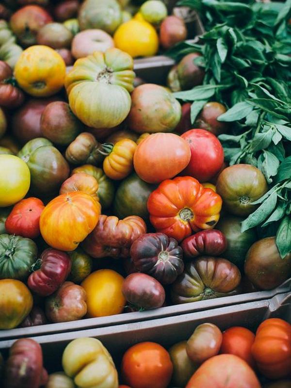 gemüse wintergarten gestalten bio produkte tomaten