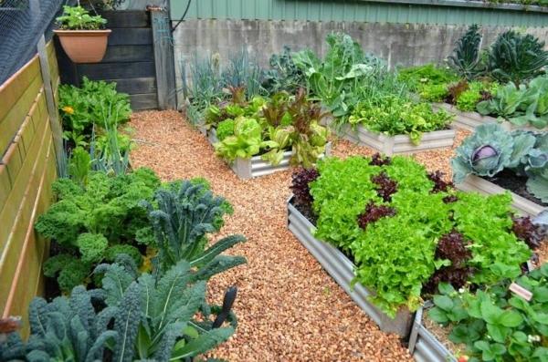 gemüse wintergarten gestalten gartenhaus pflanzen bio produkte