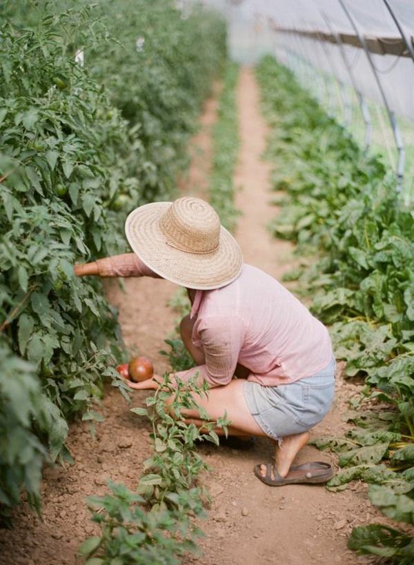 gemüse wintergarten selbst bauen bio produkte tomaten