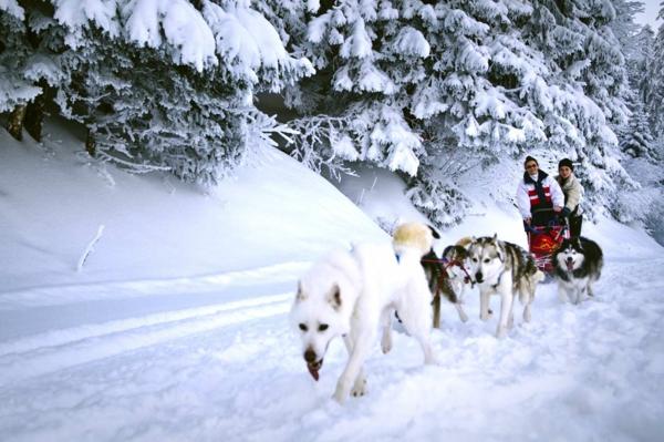 ökohotel schlittenhunderennen schnee alpen