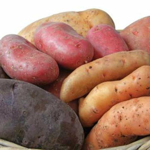 kartoffel kochen nährwerte kalorien bunt