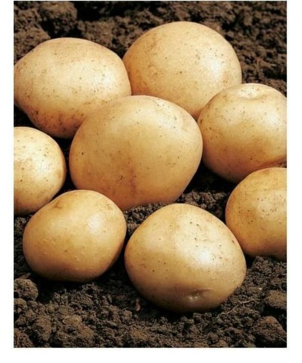 kartoffel kochen nährwerte kohlenhydrate frisch