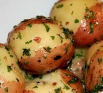 Die Kartoffelpflanze – einfache und schnelle Kartoffel Rezepte
