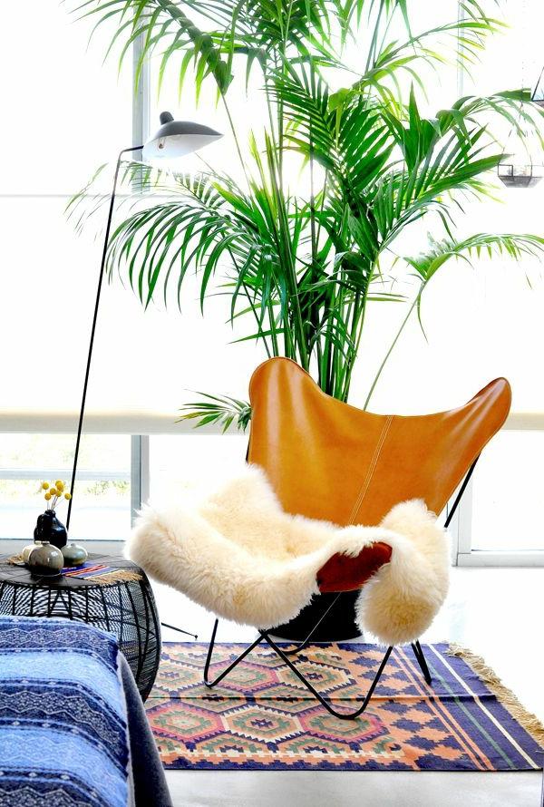 kentia palme exotisch und popul r. Black Bedroom Furniture Sets. Home Design Ideas