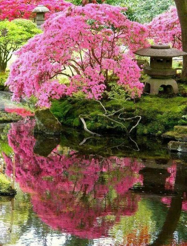 mein schöner garten rosa baumkrone