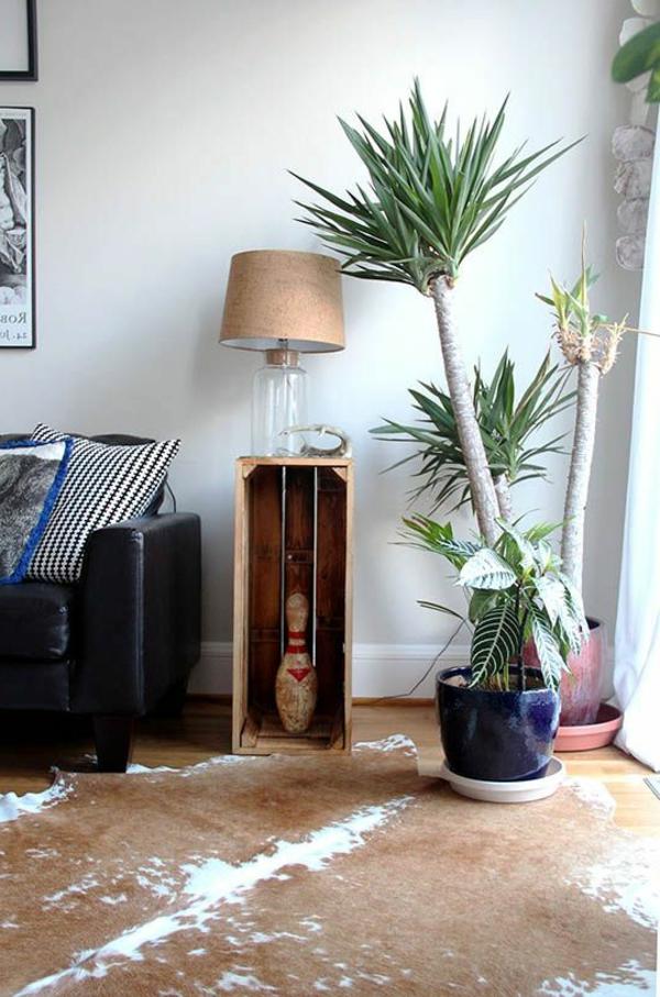 kegel yucca pflanze