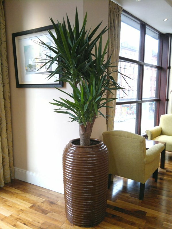 pflanzentopf yucca wohnzimmer