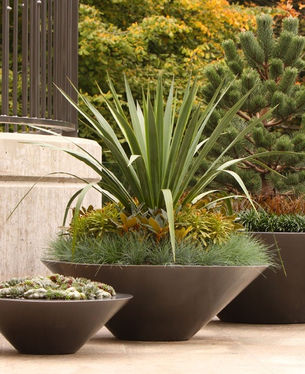 yucca draußen pflanzentopf