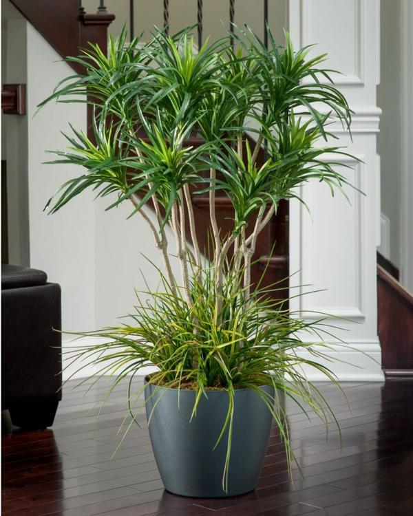 palmlilie yucca pflanze