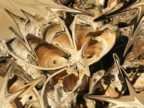 palmlilie yucca samenhülse