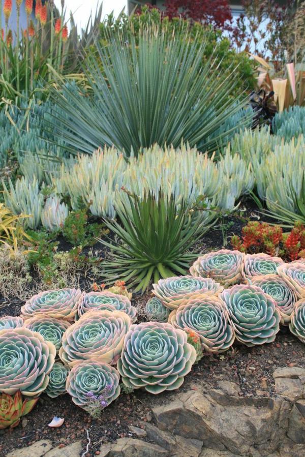 yucca sukkulenten draußen