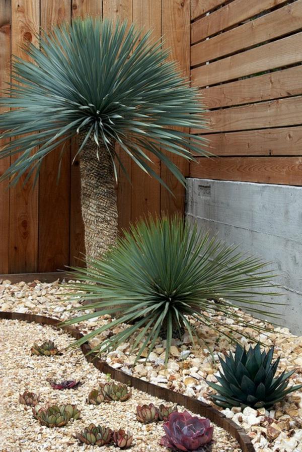 yucca sukkulenten kieselsteine subtropische vegetation