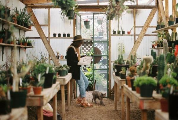 pflanzen wintergarten selbstbau gartenmöbel holzmöbel