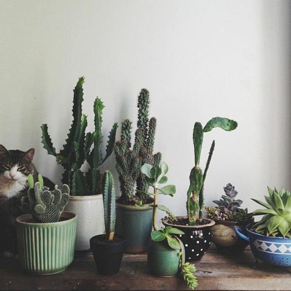 pflegeleichte zimmerpflanzen bilder sukkulenten und kakteen
