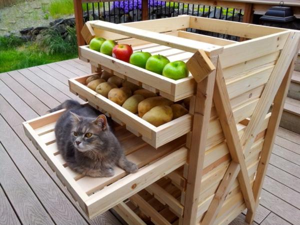 regale selber zusammenstellen früchte katze